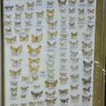Выставка насекомых от Валерия Озерянова, фото 11.