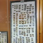 Выставка насекомых от Валерия Озерянова, фото 10.