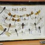 Выставка насекомых от Валерия Озерянова, фото 9.