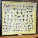 Выставка насекомых от Валерия Озерянова, фото 8.