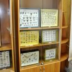 Выставка насекомых от Валерия Озерянова, фото 7.