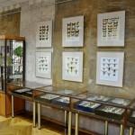 Выставка насекомых от Валерия Озерянова, фото 6.