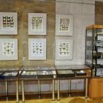 Выставка насекомых от Валерия Озерянова, фото 5.