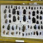 Выставка насекомых от Валерия Озерянова, фото 4.