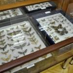Выставка насекомых от Валерия Озерянова, фото 2.