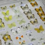 Выставка насекомых от Валерия Озерянова, фото 1.